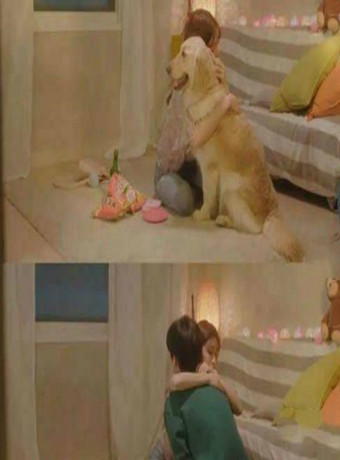 我这像狗一样的爱情