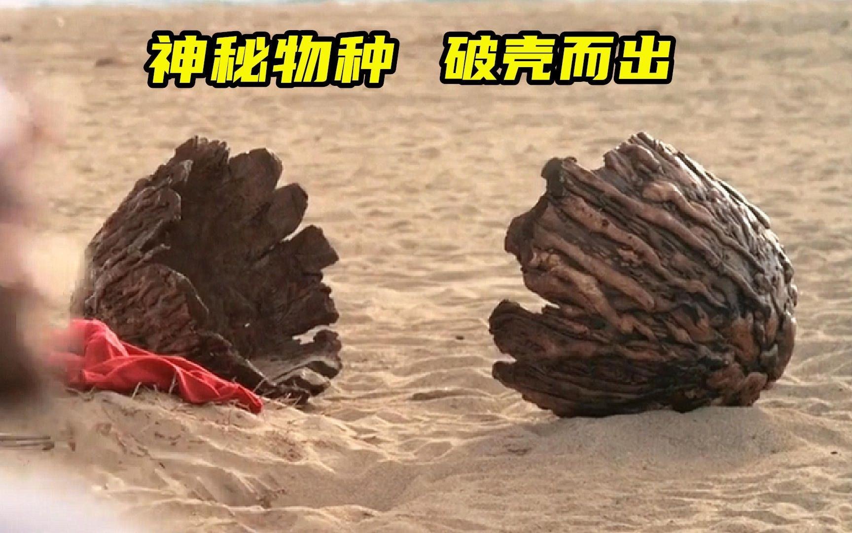 一群作死青年从海边捡回一个蛋,一夜之间人死了一半