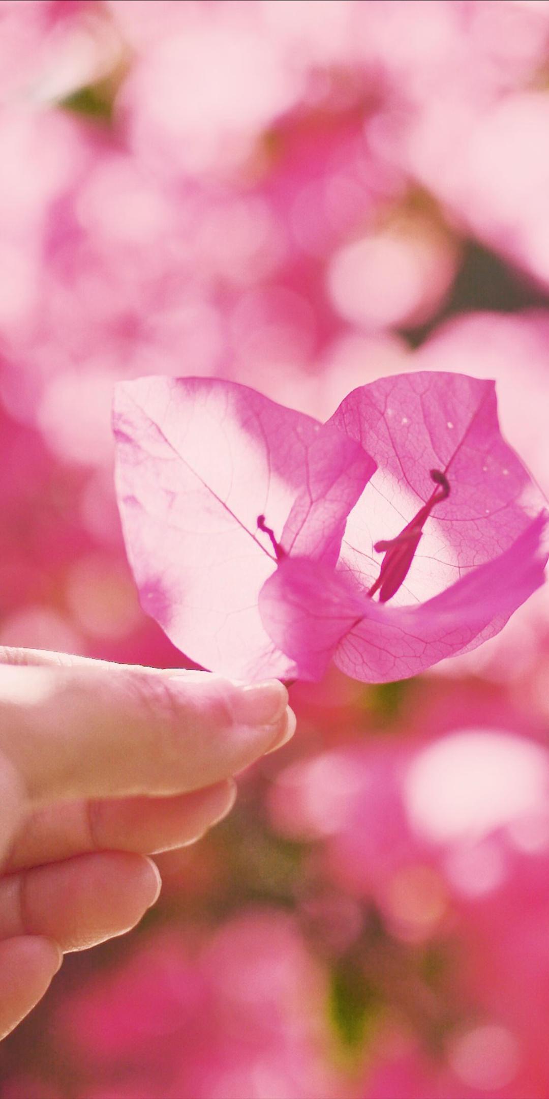 粉色系少女心手机壁纸插图43