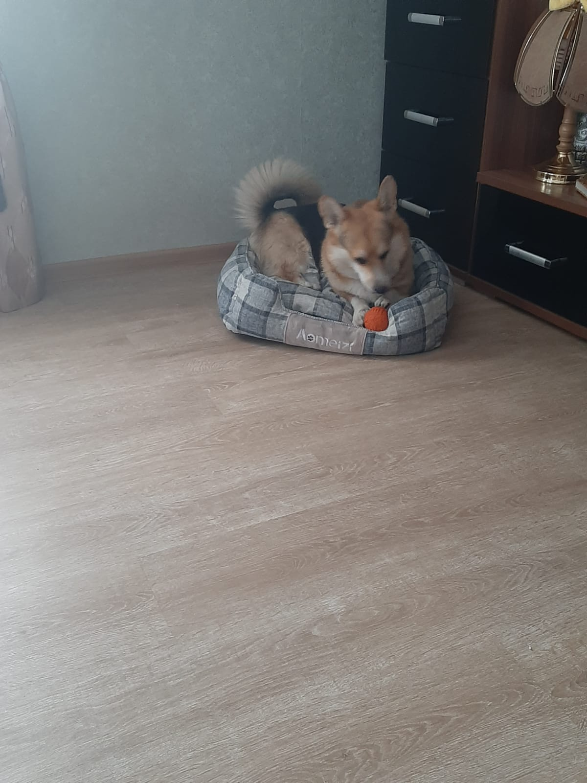 DogMEGA Warm Bed | Washable and Soft Bed for Dog photo review