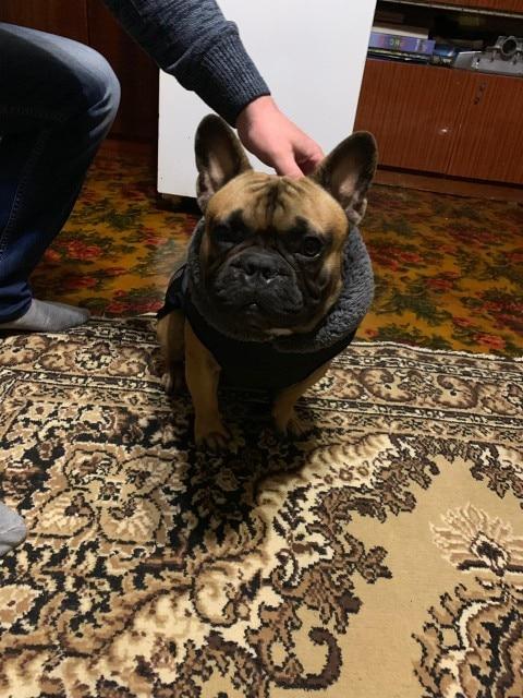 Dog Winter Waterproof Jacket photo review