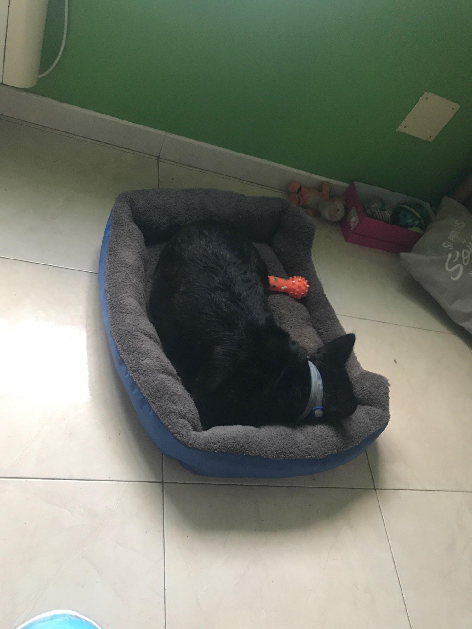 MEGA Dog Bed | Large Dog Bed | Medium Dog Bed | Large Dog Sofa photo review