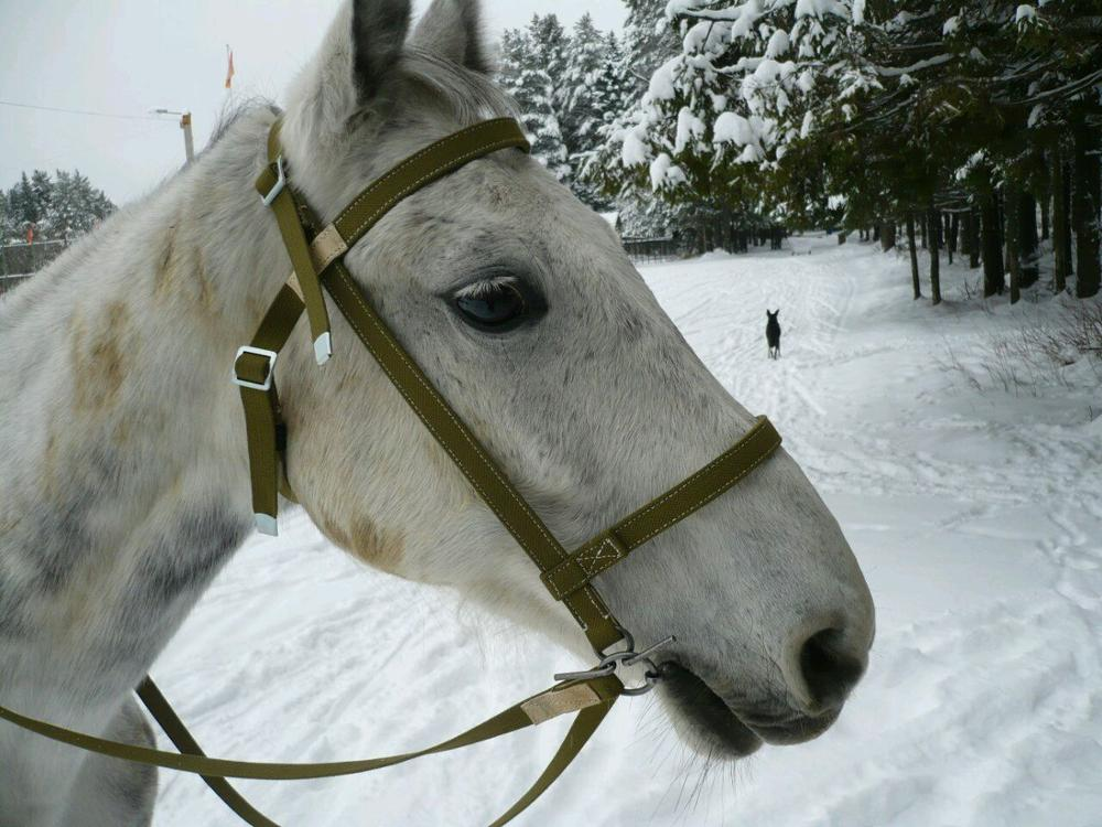Рабочая, упряжная узда с поводом для лошади