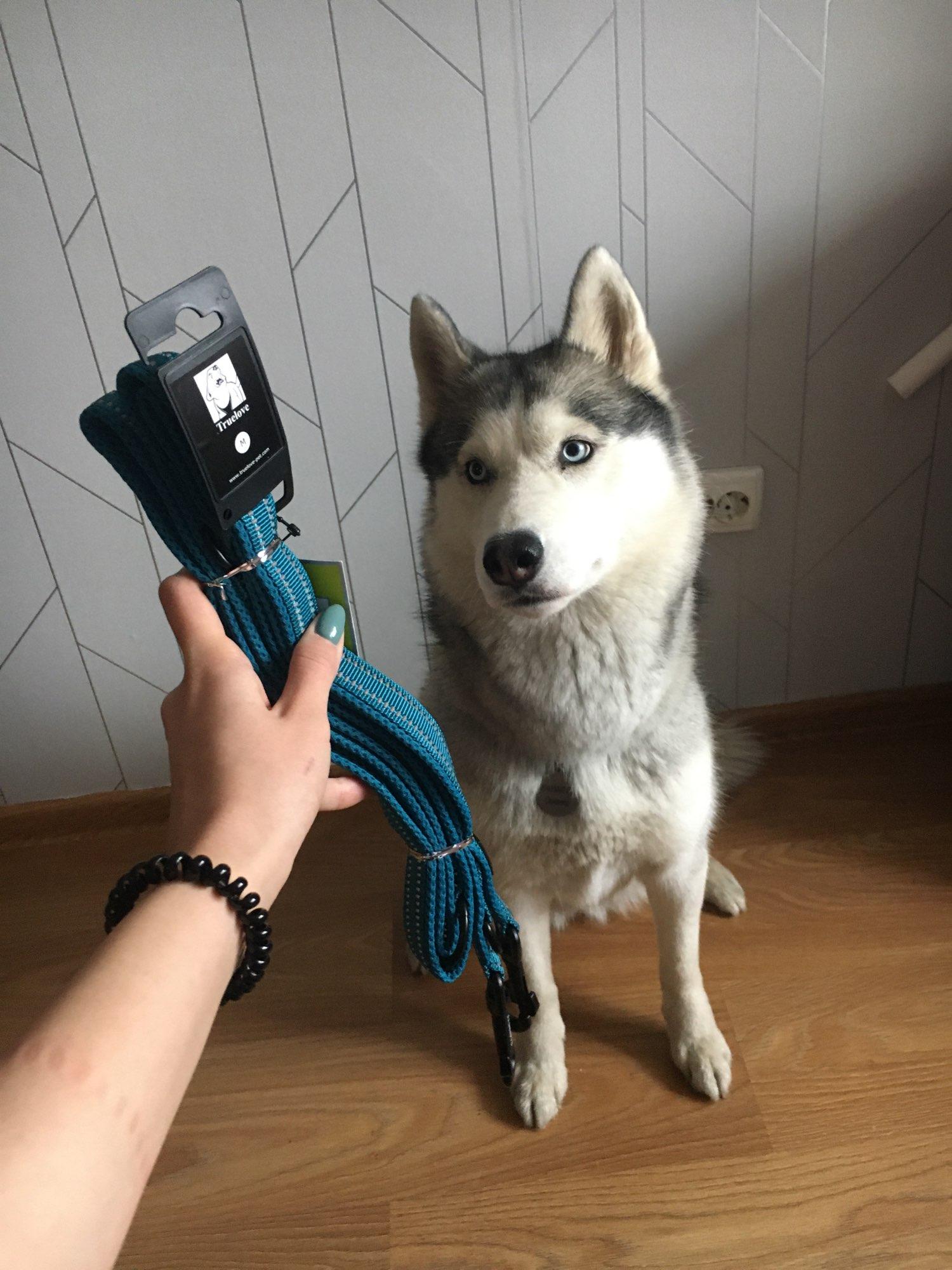 Köpek Gezdirme Kayışı