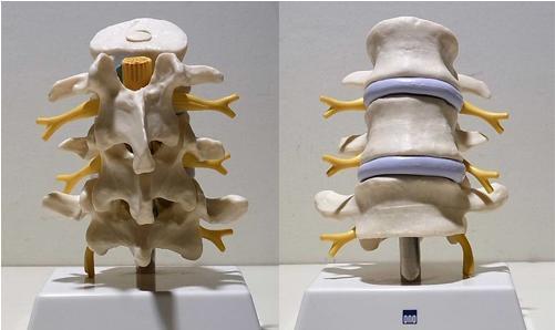 平常进行锻炼的三种方法可以起到治疗腰椎骨质增生-养生法典