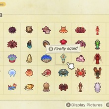 Animal Crossing: New Horizons | All Deep-sea Creatures for your museum