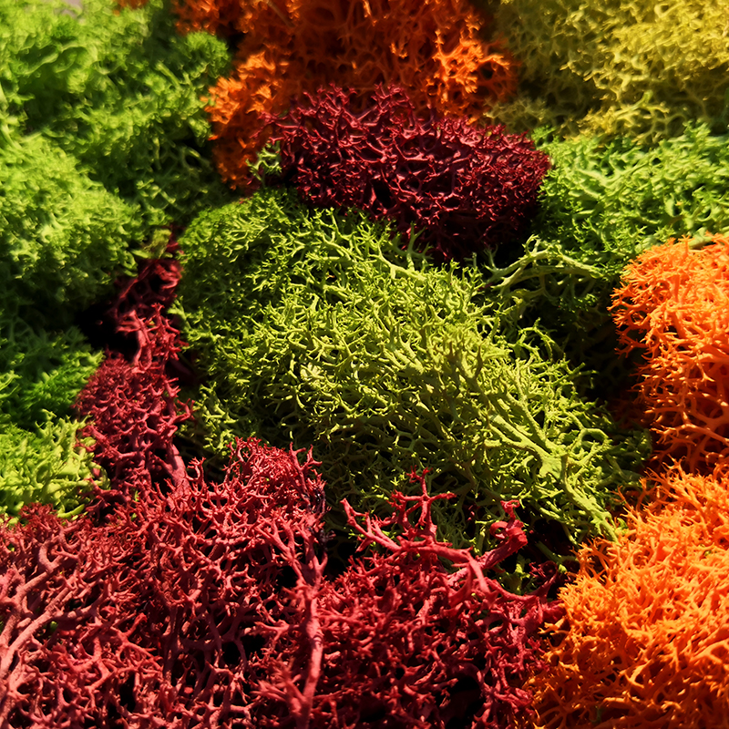 30G Lichen Moss Cluster For Bushes,model Trees Foliage Scale Model Building Material Miniature Tree Model DIY Layout Dioramas