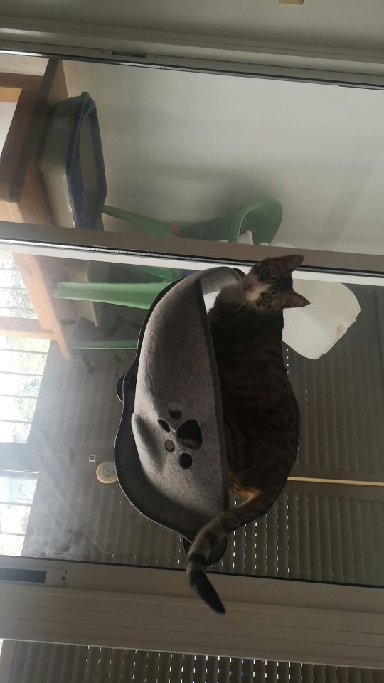 Cat mounted bed photo review