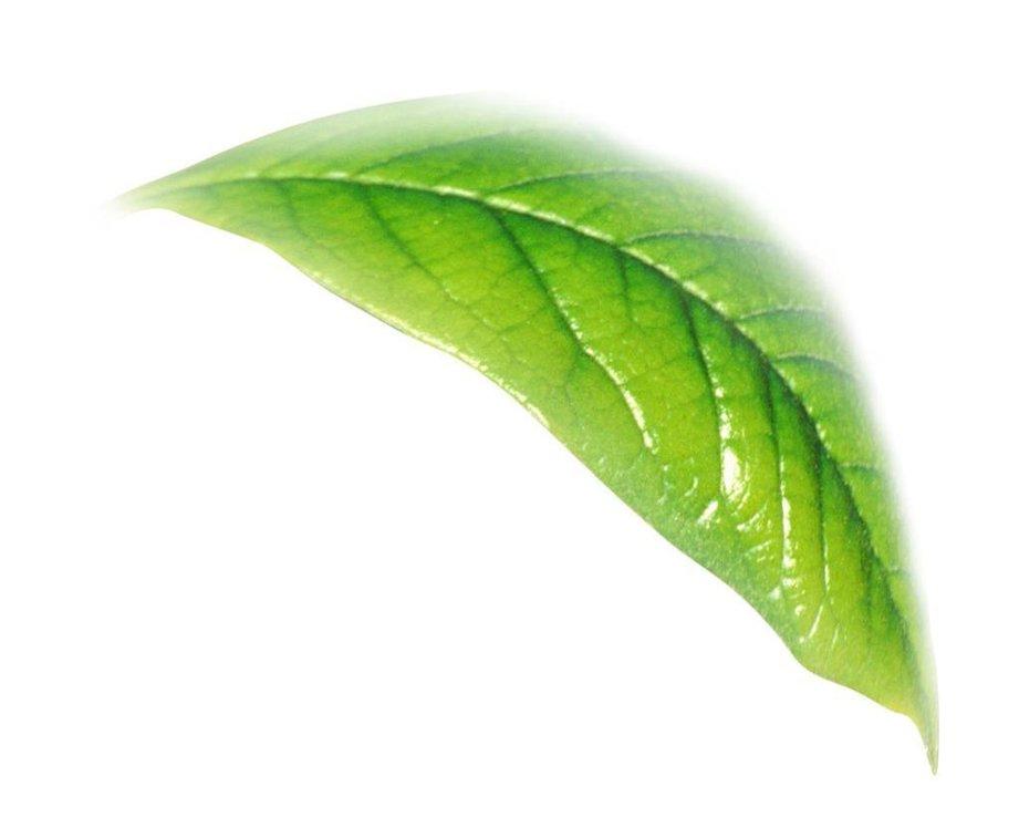 茶叶属于凉性还是热性 茶叶属性的区分-养生法典