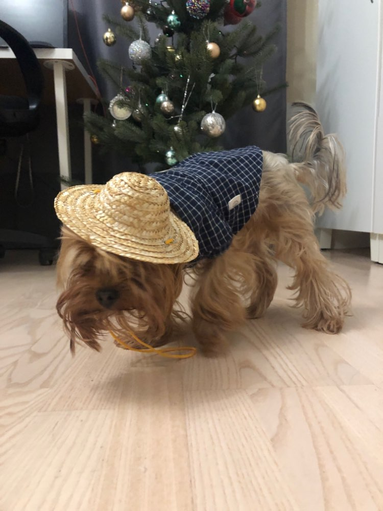 Straw Hat for Dogs | Dog Sun Hat | Cat Sun Hat | Outdoor Dog Accessories photo review