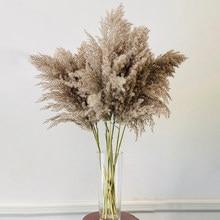 5Pcs/Bündel 50-60CM Natürliche Reed Dired Blume Große Pampas Gras Bouquet Hause Widding Dekoration Fall decor DIY Dired Reed Blumen