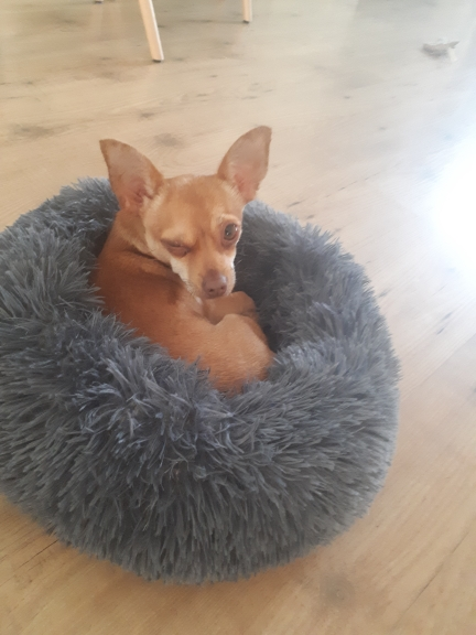 Donut Dog Bed | Donut Pet Bed | Donut Calming Pet Bed | Plush Donut Dog Bed photo review
