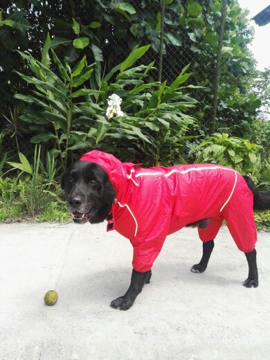DogMEGA Reflective and Waterproof Raincoat for Dog photo review