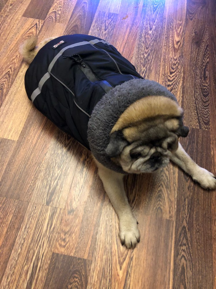 Dog Winter Waterproof Jacket photo review