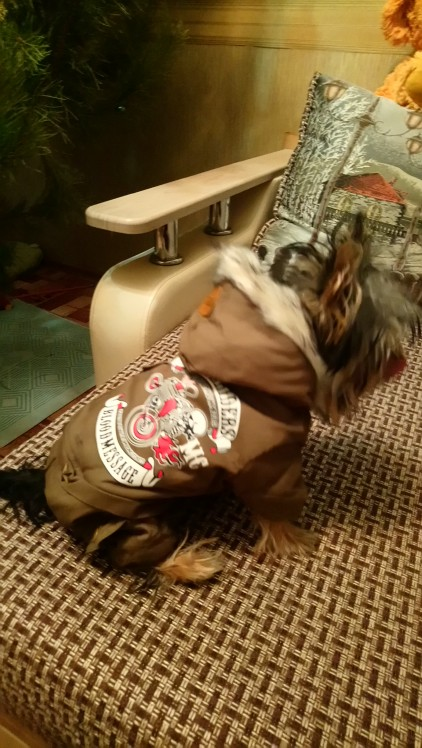 -- quente filhote cachorro