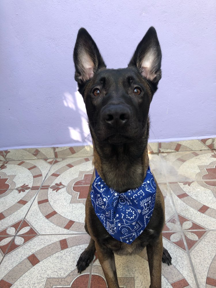 Dog Scarf Adjustable | Cute Dog Bandanas | Dog Neckerchief photo review