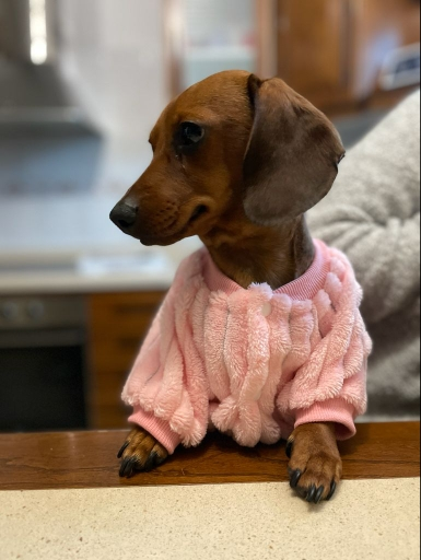 Roupa Cachorro Pelúcia - MaxHot