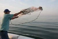 АС-130 brook рука бросить сеть, поймать Rica. размер 0.8 дюйм. радиус Foot 9.0, малый и средний примат, популярные сетка