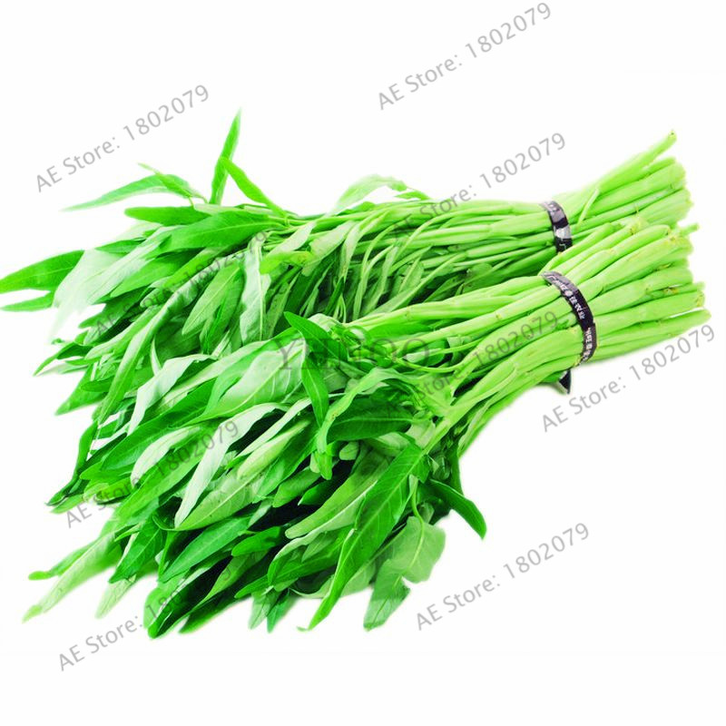100pcs/bag Big Leaf Delicious Water Spinach Bonsai,vegetable  Garden, Rich Nutrition Green Vegetables Heat-resisting