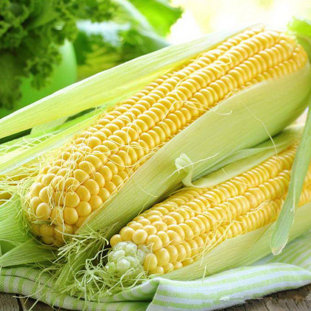 95bag hot sale organic yellow corn seeds fruit and vegetable seeds highquality