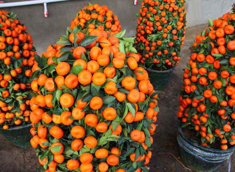 50 seeds/pack Potted Edible Fruit Seeds Bonsai Climbing Orange Tree Seeds