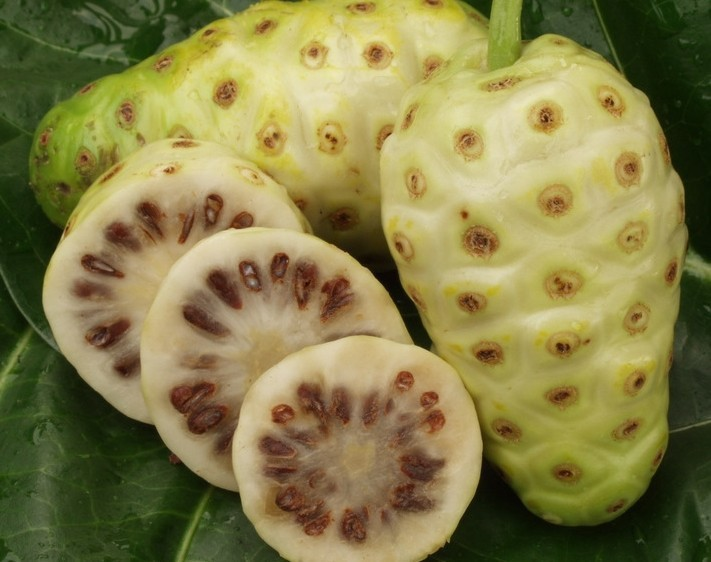 how to grow noni from seed