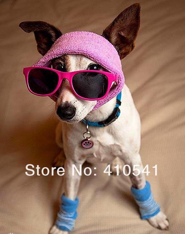 Новинка, распродажа, 32 мм* 21 мм, 200 шт./партия, высокое качество, милый Принт для ног, выгравированный щенок, собака, кошка, кличка, бирка для домашних животных