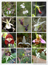 world's rare orchids 20 seed/pack  mixed color orchids, potted orchids