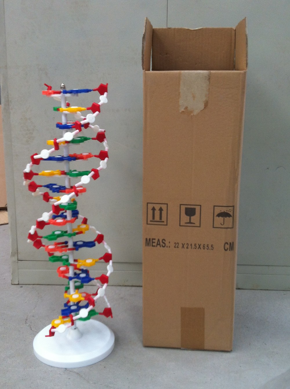 Dna molecule structure modelbiological model in medical science img0921 img0922 img0923 img0924 img0925 ccuart Choice Image