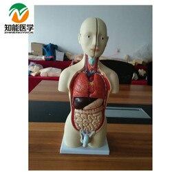 Half-Body Male Torso Mannequin (13 Parts)42cm BIX-A1037 WBW206