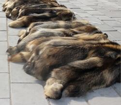 Factory Price Real Natural Raccoon Fur Skins