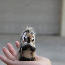 adorable squirrel woodland furred animals