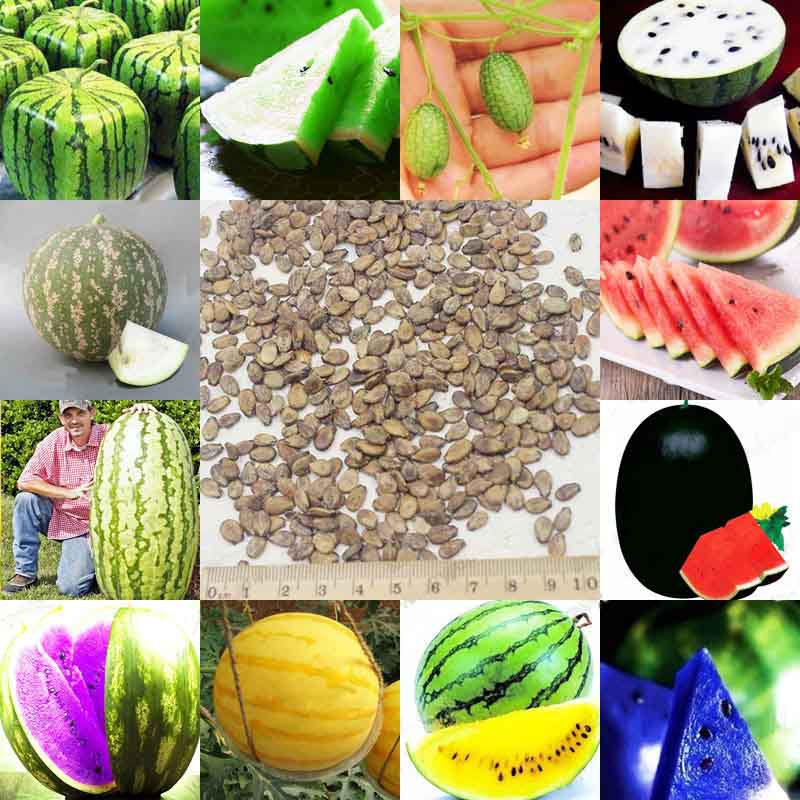 12 Kinds Rare Chinese Watermelon Seeds to Choose Delicious Fruit Water Melon Seeds Bonsai Plants Seeds – A Pack 50 Pieces