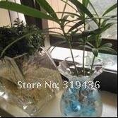 3 г / мешок 100 мешок / много polimer кристалл почвы грязи вода Глен автобусы для внутренний растение Юбилейный