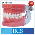 New brand Hard Gum 28 pcs Standard Dental Model Without Screw Hard Gum wax fixed Teeth A1 FE Articulator