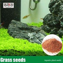 1000pcs Mini Dwarf Pearl Plants Aquarium Grass Seeds Fish Tank Decoration Ornamental Aquatic Plants Seeds for home garden