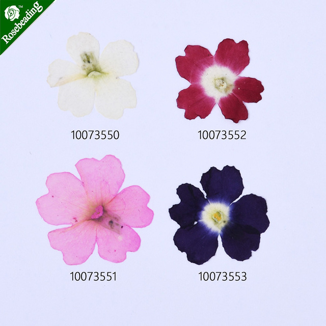 12pcs 10 20mm Pressed Flowers dried flowers Cherry blossom 100735 in     12pcs 10 20mm Pressed Flowers dried flowers Cherry blossom 100735