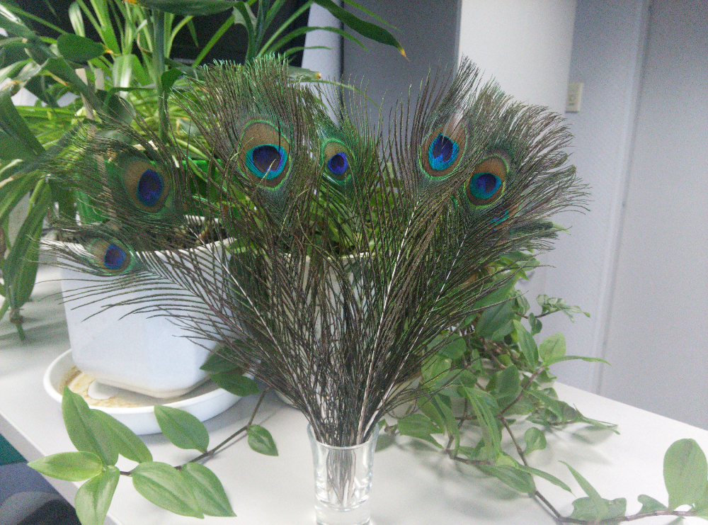 10pcs/lot natura peacock feather eyes screen bouquet green beautiful DIY home holiday decorations wedding party