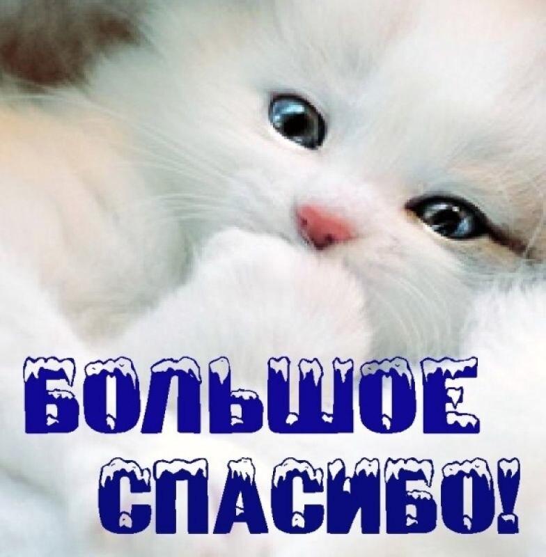 Спасибо открытки с котами