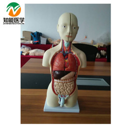 Half-Body Male Torso Mannequin (13 Parts)42cm   BIX-A1037  MQ039