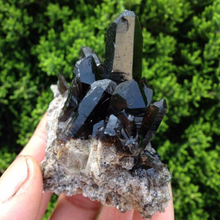 Smoky Quartz Crystal Point Cluster
