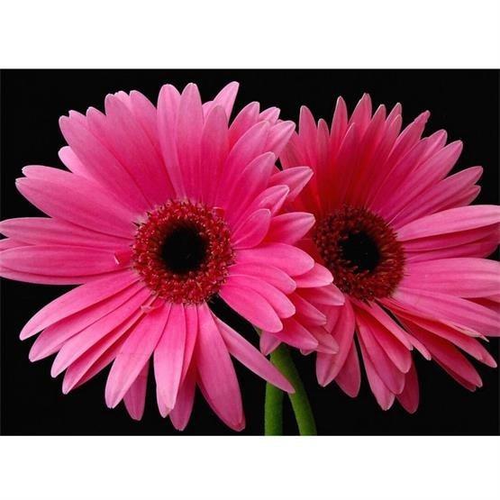 ᗛCNA Diy 5D Diamond Painting Flower Daisy 3D Cross Stitch