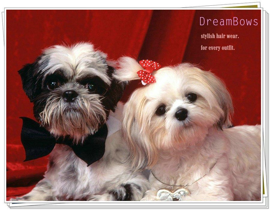 Best Hair Bows Bow Adorable Dog - UT8ykmBXbXdXXagOFbXz  Image_586164  .jpg