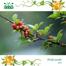 5pcs/bag Delicious sweet and sour plum fruit tree seeds, Home Garden Plant