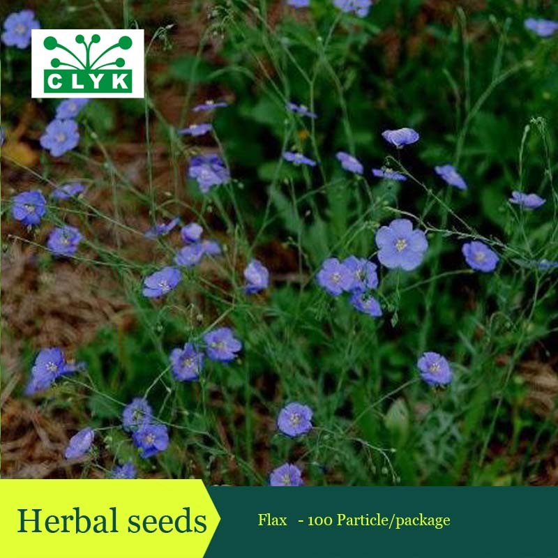 100PCS non-gmo Flax flowers seeds,Chinese herb seeds ...