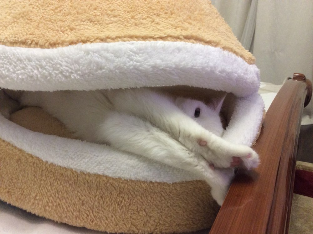 Warm Cat Bed House Pet Suppliers