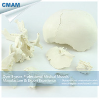12392 1 / White 22parts Adult Humans Skull Model, Medical Science Educational Teaching Anatomical Models