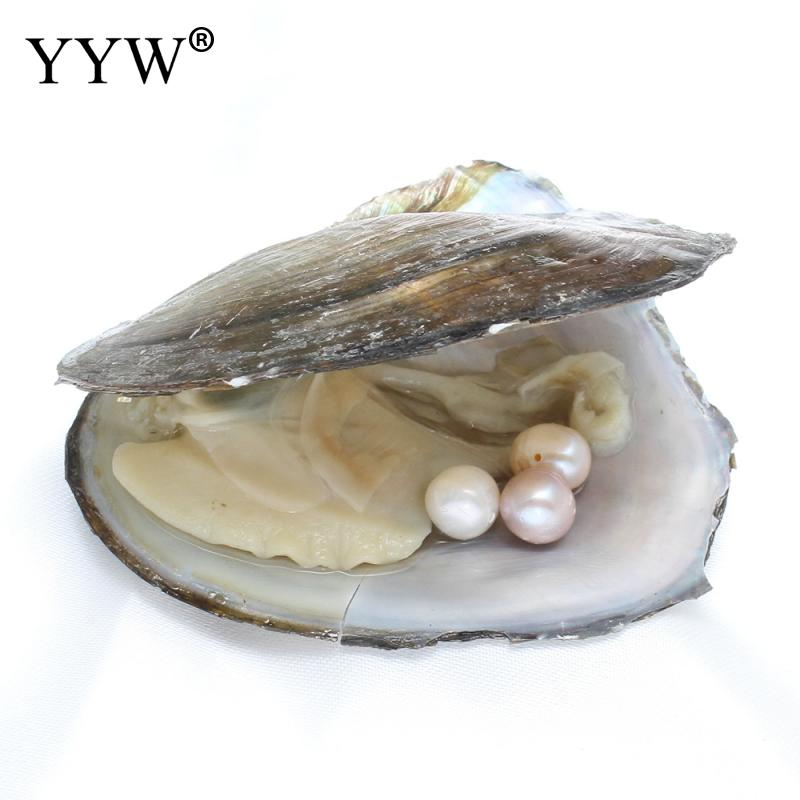 Vacuum pack Oyster Wish Freshwater Pearl Pearl Mussel Shell with Pearl Inside Different Colors of Pearl 8-9mm Mysterious Gift