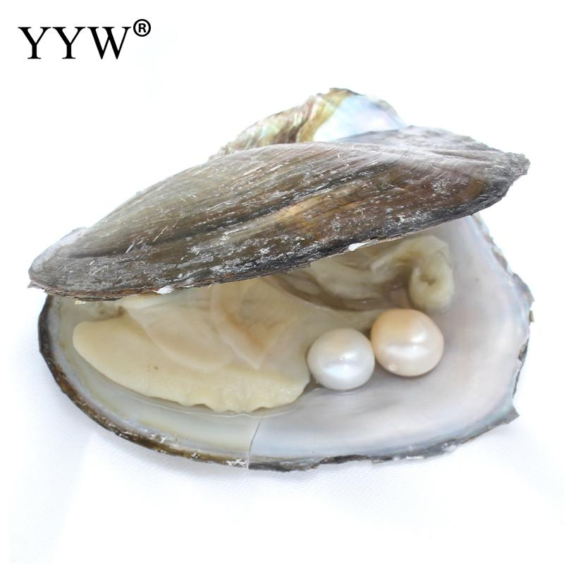 Vacuum pack Oyster Freshwater Pearl Mussel Shell with Pearl Inside Different Colors of Pearl Mysterious Gift Surprise 10-11mm
