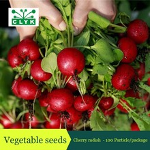 10Cherry Belle Radish Seeds,100% Real seed Delicious Sweet Vegetable Seeds, Plastics Seed storage bottle Packaging